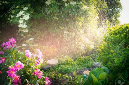 59606597-rain-in-lovely-summer-garden-with-flowers-and-sunlight-outdoor-nature-background