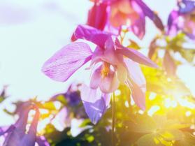 FlowerinSun