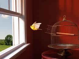 birdescapecage